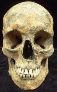 Europe - England - Introduction to Human Osteology, Sheffield, S. Yorkshire, England - 2013