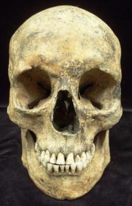 Europe - England - 5 Day Introduction to Human Osteology at The University of Sheffield - 2012