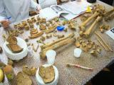 Europe - Romania - Transylvania - Osteology Survey and Workshop - 2013